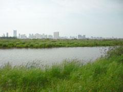 松花江の湿地。遠くに松北区のビル群