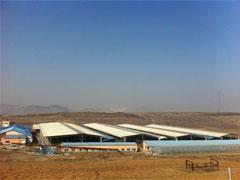 広大な土地に広がる牛舎。1600頭の牛がのびのびしている。良質な乳が年間6150t搾乳される。