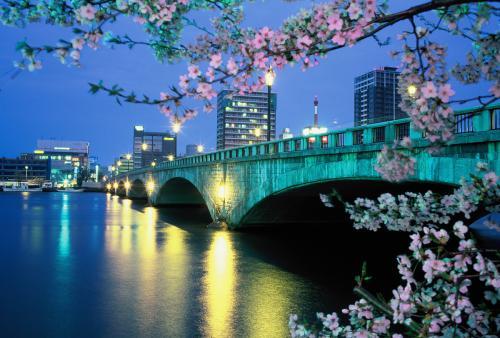 万代桥-樱花