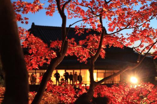 旧斋藤家别墅-红叶